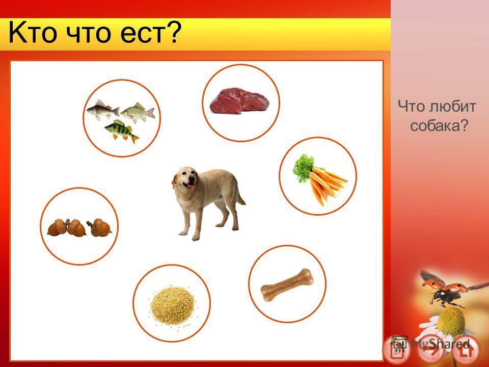 Кто что ест? Что любит собака?