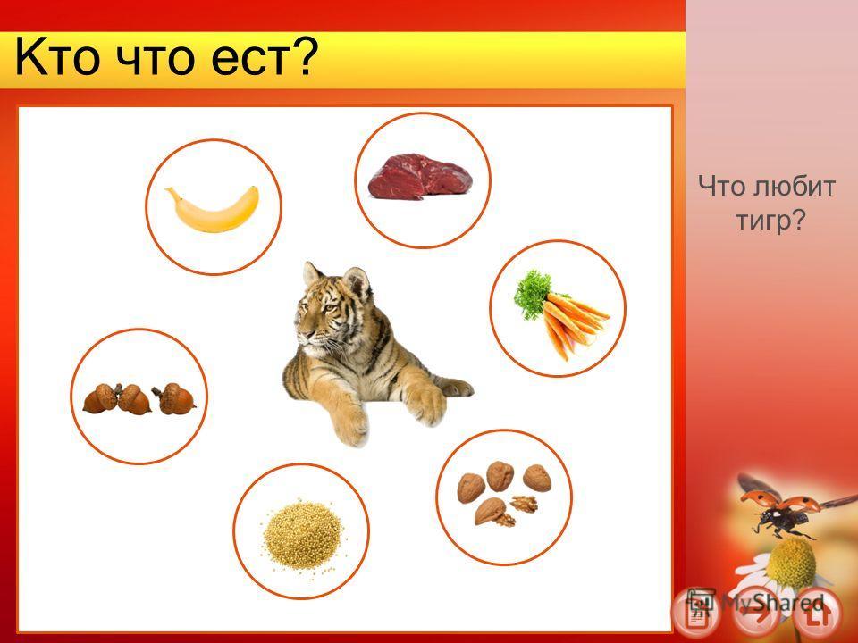 Кто что ест? Что любит тигр?