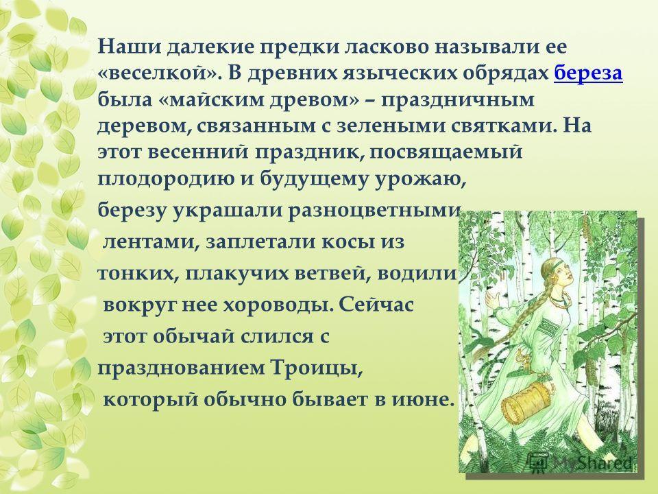 Наши далекие предки ласково называли ее «веселкой». В древних языческих обрядах береза была «майским древом» – праздничным деревом, связанным с зелеными святками. На этот весенний праздник, посвящаемый плодородию и будущему урожаю,береза березу украш