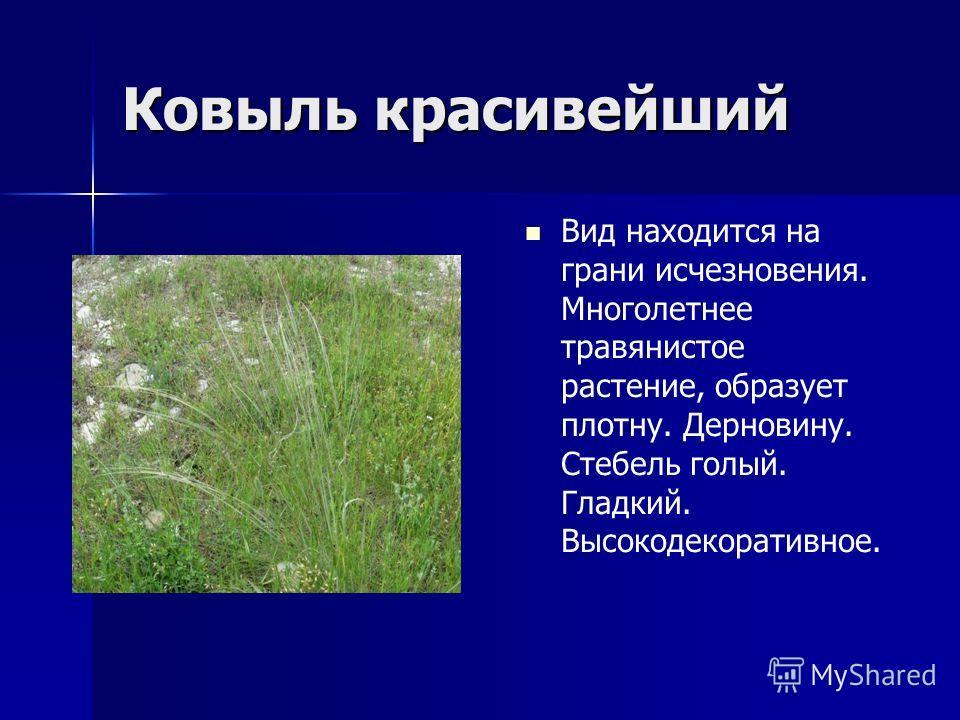 Ковыль красивейший Вид находится на грани исчезновения. Многолетнее травянистое растение, образует плотну. Дерновину. Стебель голый. Гладкий. Высокодекоративное.