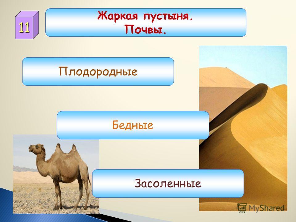 10 Жаркая пустыня. Зима. Холодная. Теплая. Жаркая.