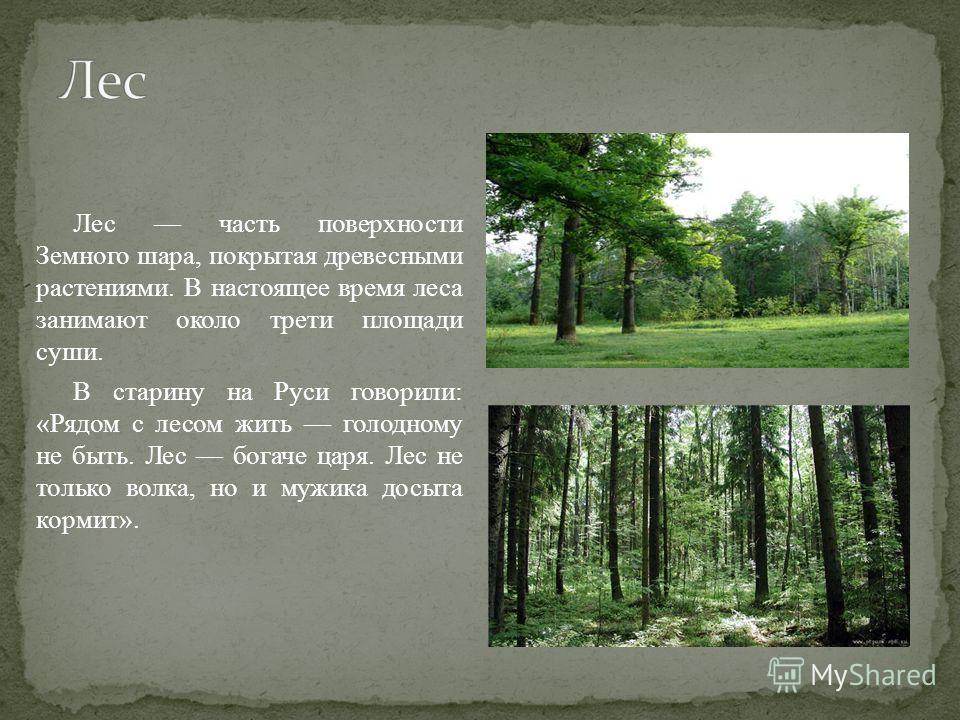 Лес часть поверхности Земного шара, покрытая древесными растениями. В настоящее время леса занимают около трети площади суши. В старину на Руси говорили: «Рядом с лесом жить голодному не быть. Лес богаче царя. Лес не только волка, но и мужика досыта