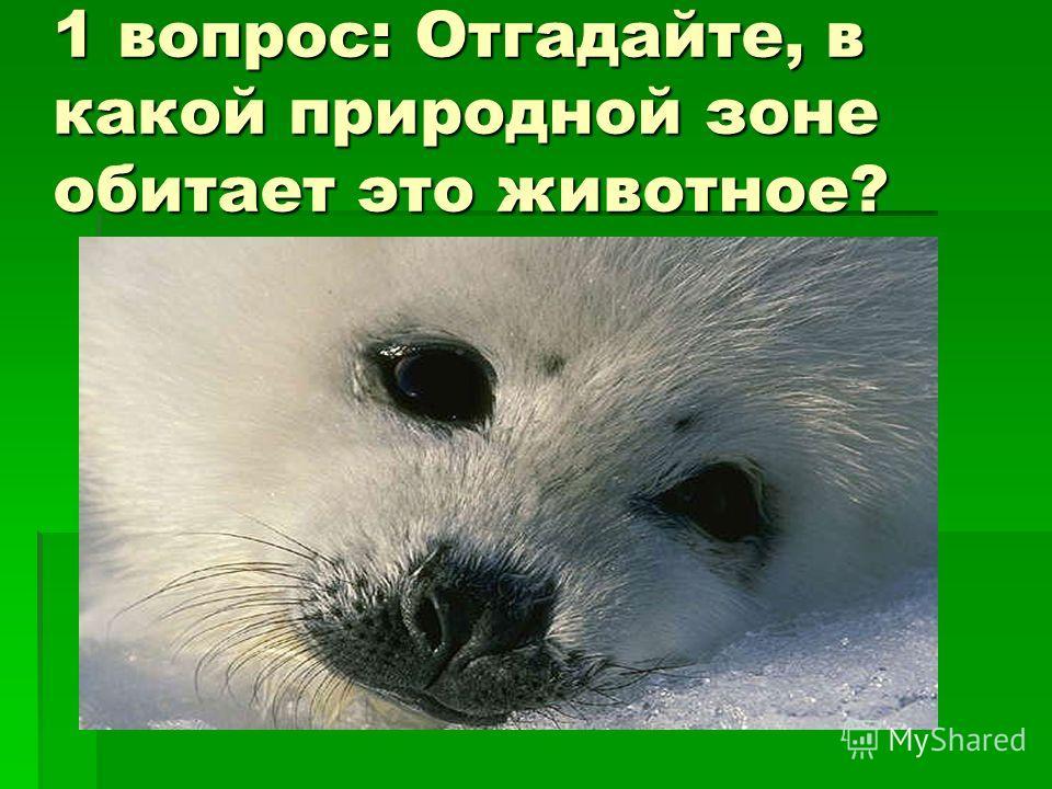 1 вопрос: Отгадайте, в какой природной зоне обитает это животное?