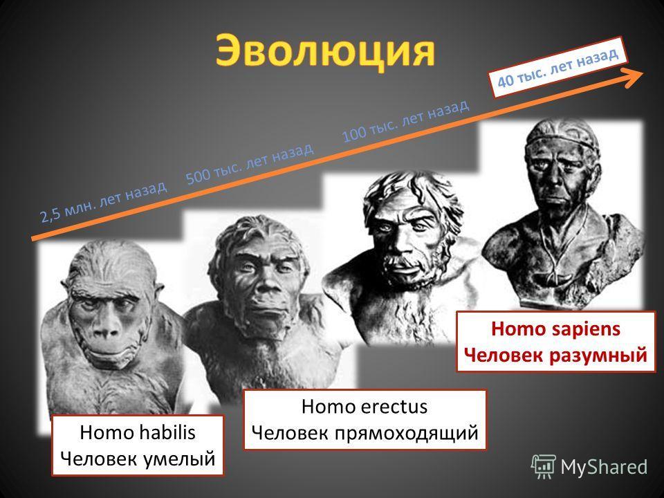 Homo erectus Человек прямоходящий 2,5 млн. лет назад 500 тыс. лет назад 100 тыс. лет назад 40 тыс. лет назад Homo habilis Человек умелый Homo sapiens Человек разумный