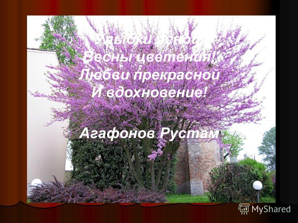 Улыбки ясной, Весны цветения! Любви прекрасной И вдохновение! Агафонов Рустам
