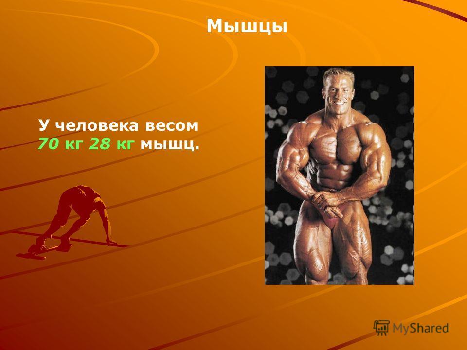 У человека весом 70 кг 28 кг мышц. Мышцы