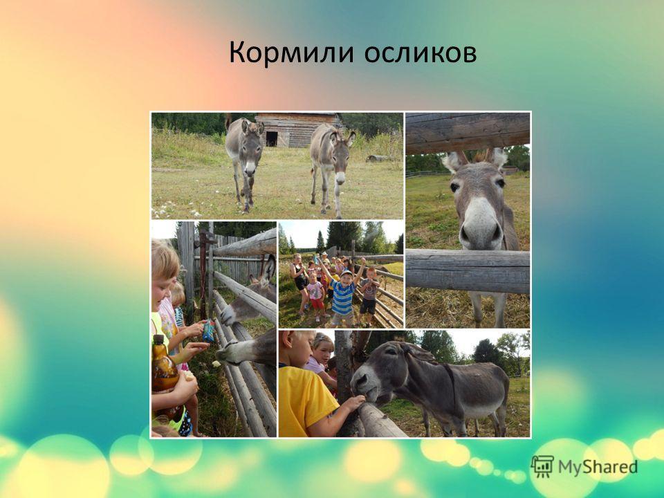 Кормили осликов
