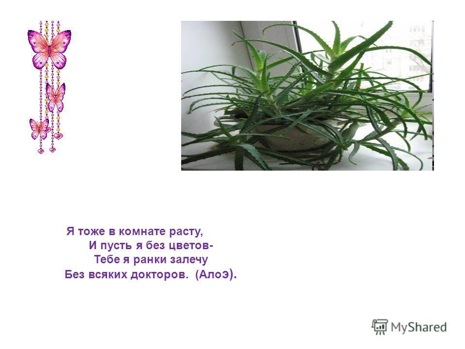 Я тоже в комнате расту, И пусть я без цветов- Тебе я ранки залечу Без всяких докторов. (Ало э).
