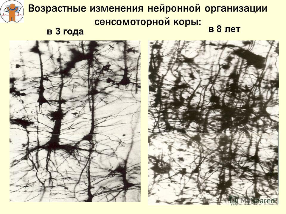 Возрастные изменения нейронной организации сенсомоторной коры: в 3 года в 8 лет