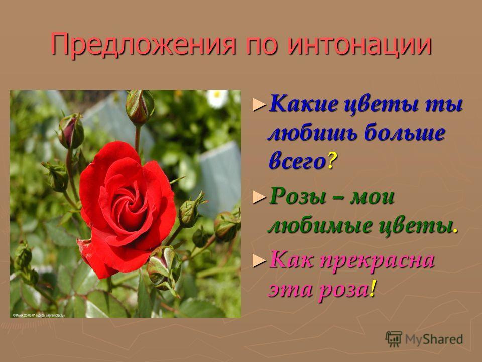 Предложения по интонации Какие цветы ты любишь больше всего? Розы – мои любимые цветы. Как прекрасна эта роза!