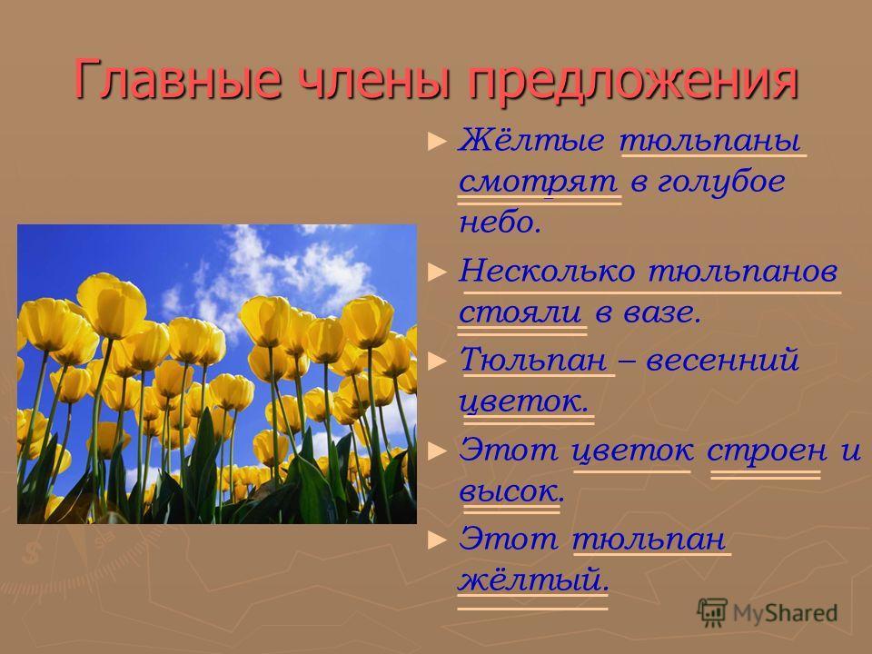 Главные члены предложения Жёлтые тюльпаны смотрят в голубое небо. Несколько тюльпанов стояли в вазе. Тюльпан – весенний цветок. Этот цветок строен и высок. Этот тюльпан жёлтый.