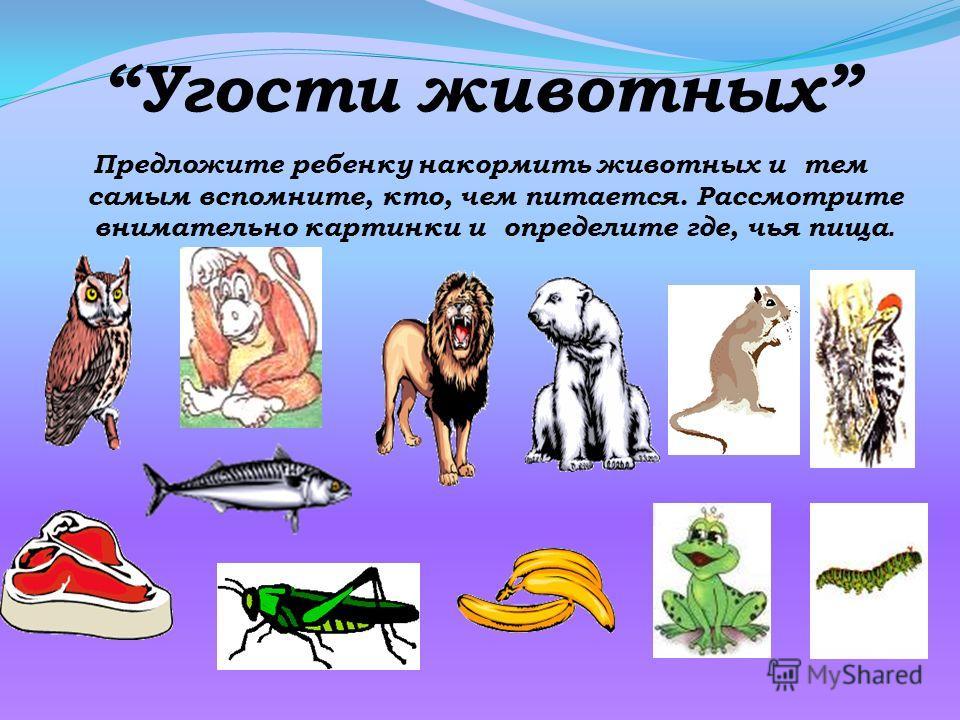 Угости животных Предложите ребенку накормить животных и тем самым вспомните, кто, чем питается. Рассмотрите внимательно картинки и определите где, чья пища.