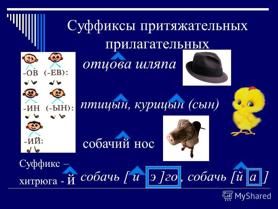 Суффиксы притяжательных прилагательных отцова шляпа птицын, курицын (сын) собачий нос Суффикс – хитрюга - й cобачь [ й э ]го, собачь [й а ]