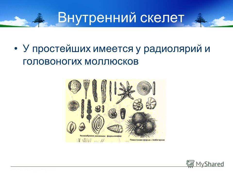 Внутренний скелет У простейших имеется у радиолярий и головоногих моллюсков