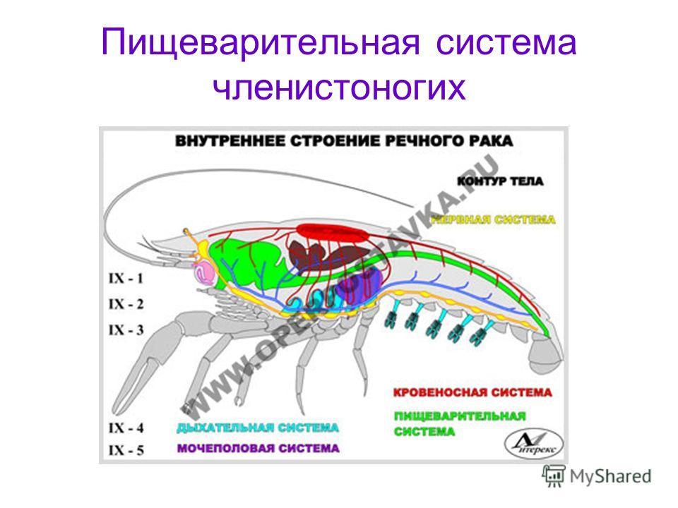 как избавить от паразитов в организме человека