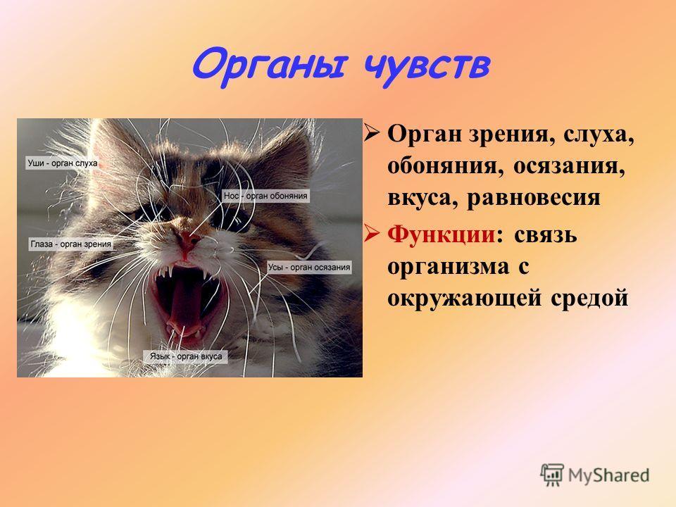 презентация 7 класс органы чувств регуляция деятельности организма