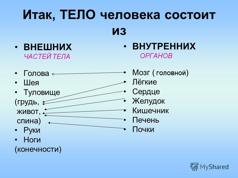 Итак, ТЕЛО человека состоит из ВНЕШНИХ ЧАСТЕЙ ТЕЛА Голова Шея Туловище (грудь, живот, спина) Руки Ноги (конечности) ВНУТРЕННИХ ОРГАНОВ Мозг ( ГОЛОВНОЙ ) Лёгкие Сердце Желудок Кишечник Печень Почки