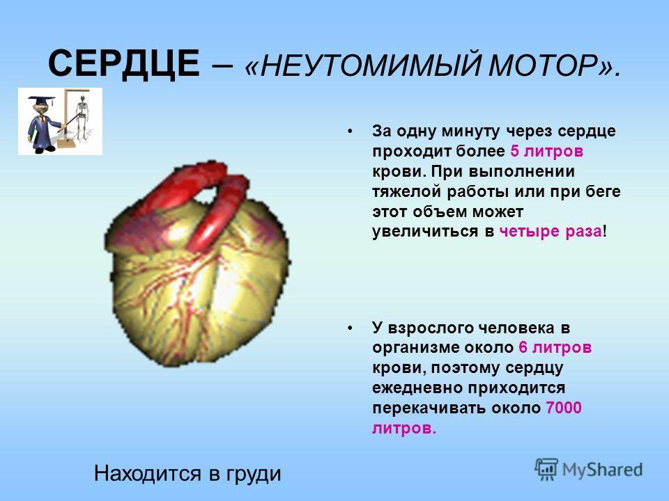 СЕРДЦЕ – «НЕУТОМИМЫЙ МОТОР». За одну минуту через сердце проходит более 5 литров крови. При выполнении тяжелой работы или при беге этот объем может увеличиться в четыре раза! У взрослого человека в организме около 6 литров крови, поэтому сердцу ежедн