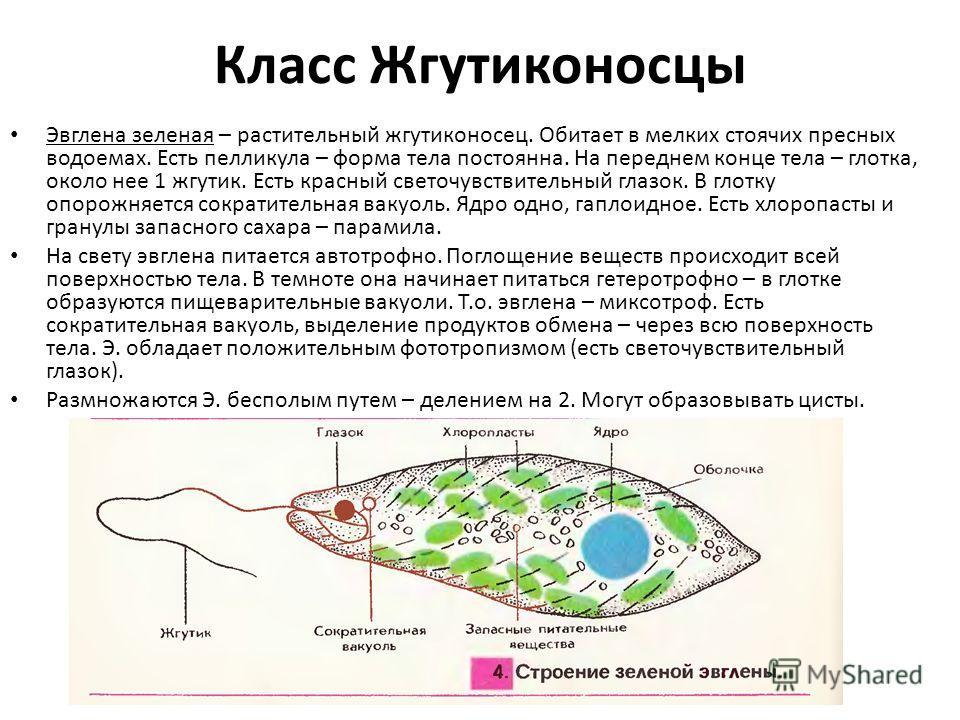Вольвокс где обитает
