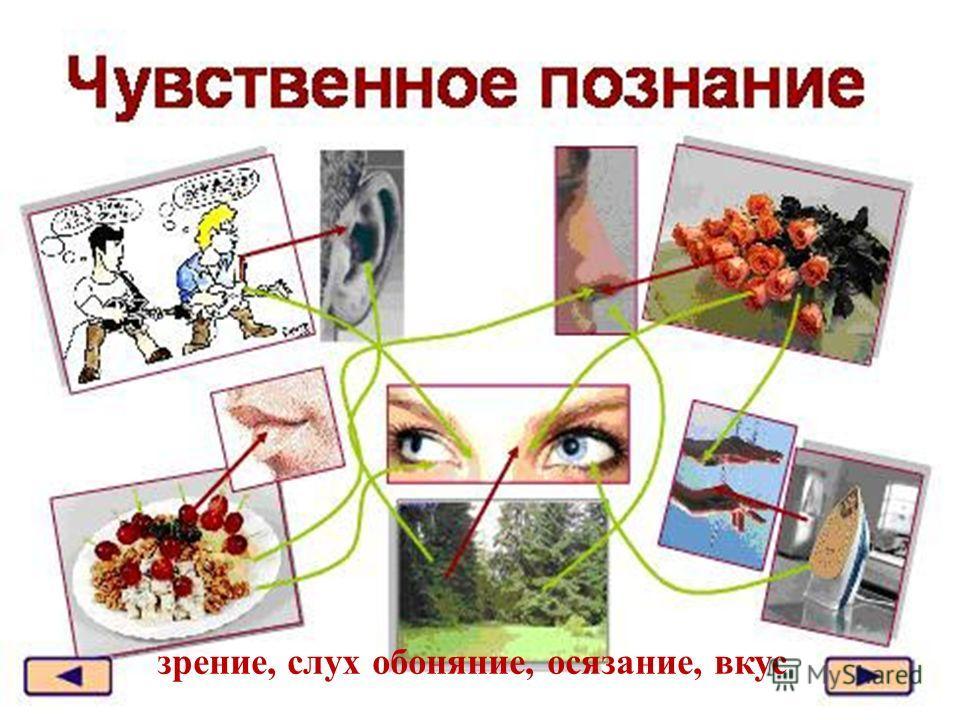 зрение, слух обоняние, осязание, вкус