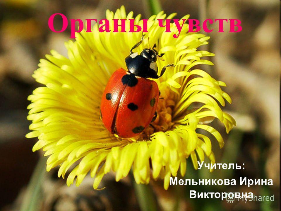 Органы чувств Учитель: Мельникова Ирина Викторовна