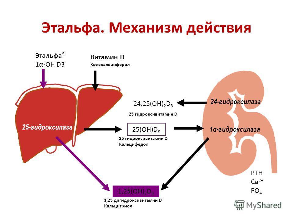Этальфа. Механизм действия Этальфа ® 1α-ОН D3 Витамин D Холекальциферол 24,25(ОН) 2 D 3 24-гидроксилаза 1α-гидроксилаза 25(ОН)D 3 1,25(ОН) 2 D 3 25-гидроксилаза 25 гидроксивитамин D Кальцифедол 1,25 дигидроксивитамин D Кальцитриол PTH Ca 2+ PO 4 25 г