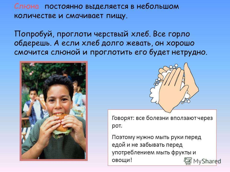 Слюна постоянно выделяется в небольшом количестве и смачивает пищу. Попробуй, проглоти черствый хлеб. Все горло обдерешь. А если хлеб долго жевать, он хорошо смочится слюной и проглотить его будет нетрудно. Говорят: все болезни вползают через рот. По