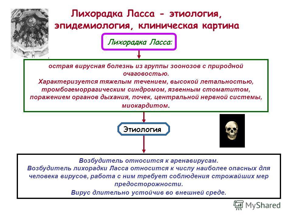 Лихорадка Москитная