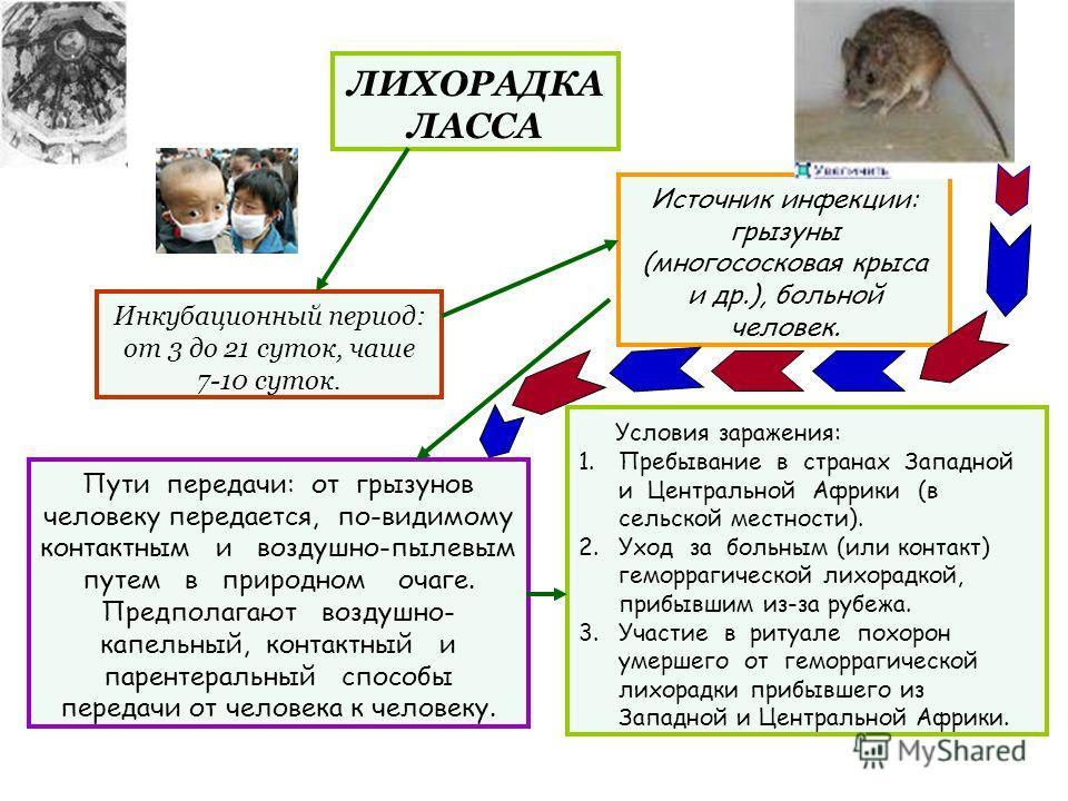ЛИХОРАДКА ЛАССА Инкубационный период: от 3 до 21 суток, чаше 7-10 суток. Источник инфекции: грызуны (многососковая крыса и др.), больной человек. Пути передачи: от грызунов человеку передается, по-видимому контактным и воздушно-пылевым путем в природ