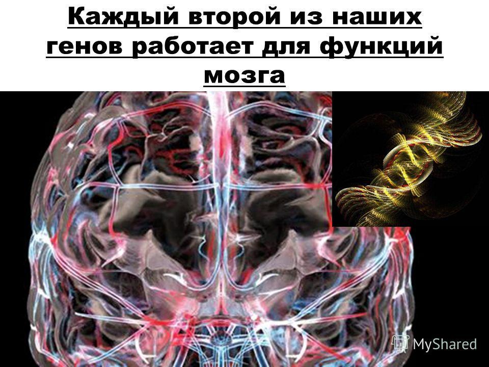 Каждый второй из наших генов работает для функций мозга