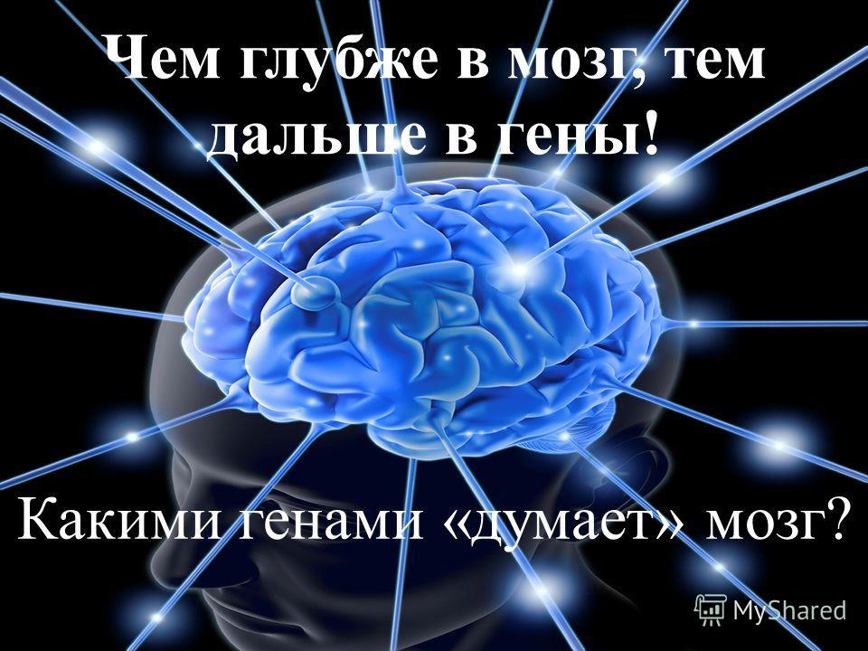Чем глубже в мозг, тем дальше в гены! Какими генами «думает» мозг?