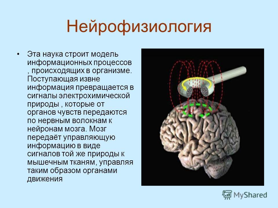 Нейрофизиология Эта наука строит модель информационных процессов, происходящих в организме. Поступающая извне информация превращается в сигналы электрохимической природы, которые от органов чувств передаются по нервным волокнам к нейронам мозга. Мозг