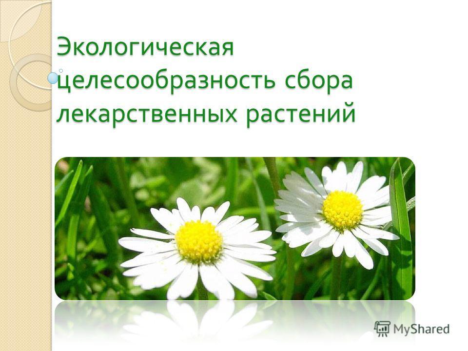Экологическая целесообразность сбора лекарственных растений