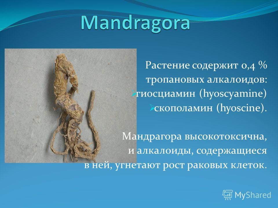 Растение содержит 0,4 % тропановых алкалоидов: гиосциамин (hyoscyamine) скополамин (hyoscine). Мандрагора высокотоксична, и алкалоиды, содержащиеся в ней, угнетают рост раковых клеток.
