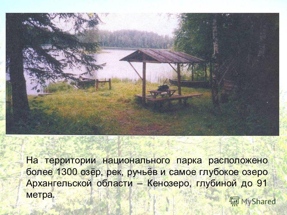 На территории национального парка расположено более 1300 озёр, рек, ручьёв и самое глубокое озеро Архангельской области – Кенозеро, глубиной до 91 метра.
