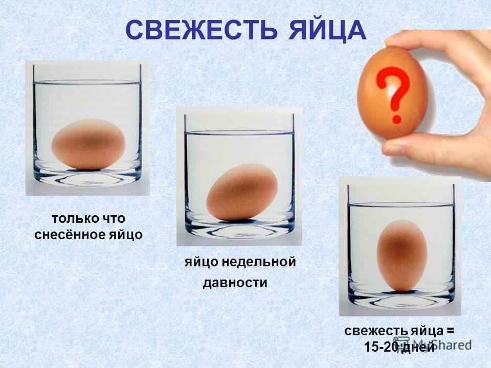 СВЕЖЕСТЬ ЯЙЦА яйцо недельной давности свежесть яйца = 15-20 дней только что снесённое яйцо