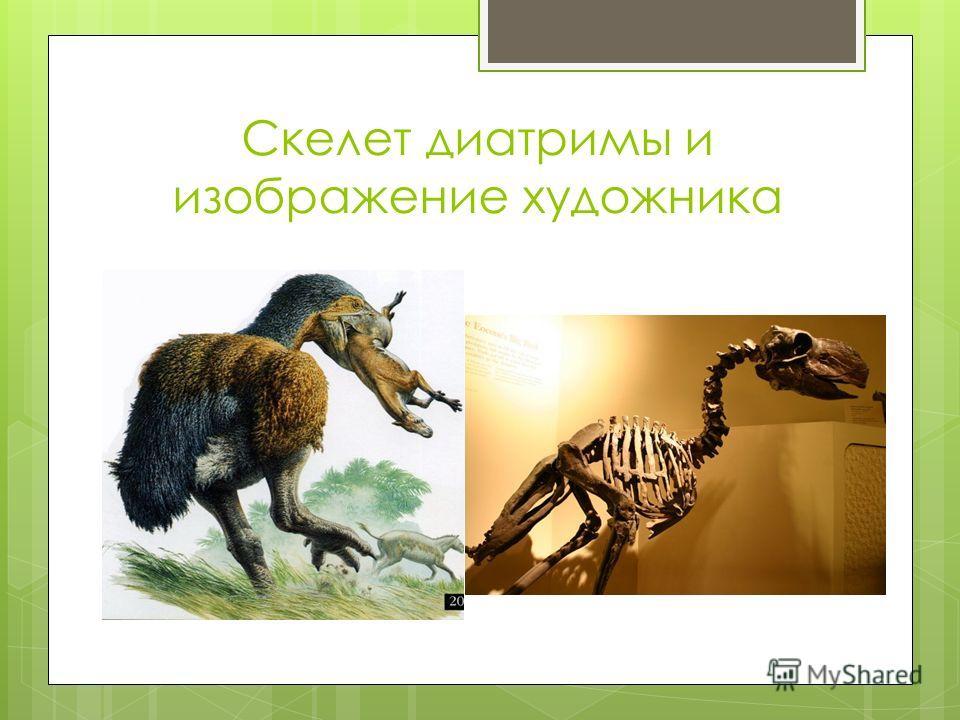 Скелет диатримы и изображение художника