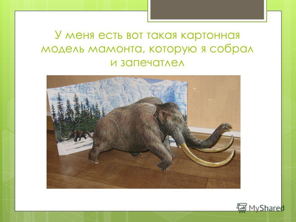 У меня есть вот такая картонная модель мамонта, которую я собрал и запечатлел