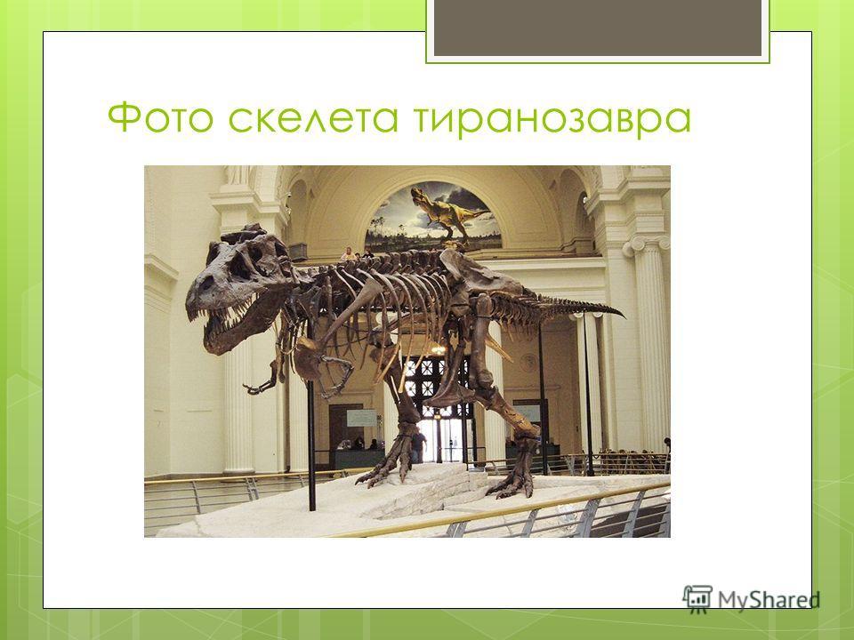 Фото скелета тиранозавра