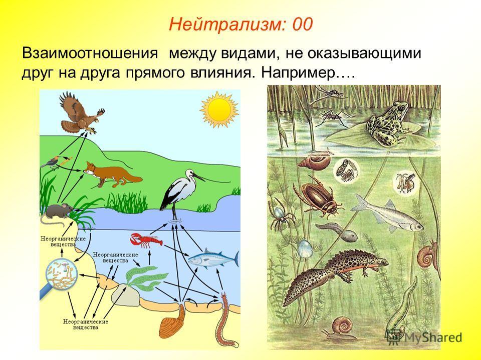 Взаимоотношения между видами, не оказывающими друг на друга прямого влияния. Например…. Нейтрализм: 00