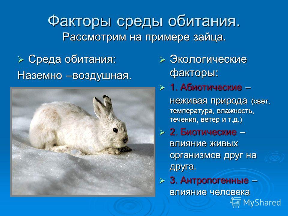 Факторы среды обитания. Рассмотрим на примере зайца. Среда обитания: Среда обитания: Наземно –воздушная. Экологические факторы: Экологические факторы: 1. Абиотические – неживая природа (свет, температура, влажность, течения, ветер и т.д.) 1. Абиотиче
