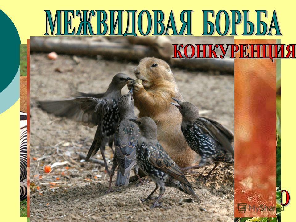 – взаимоотношения между организмами разных видов.