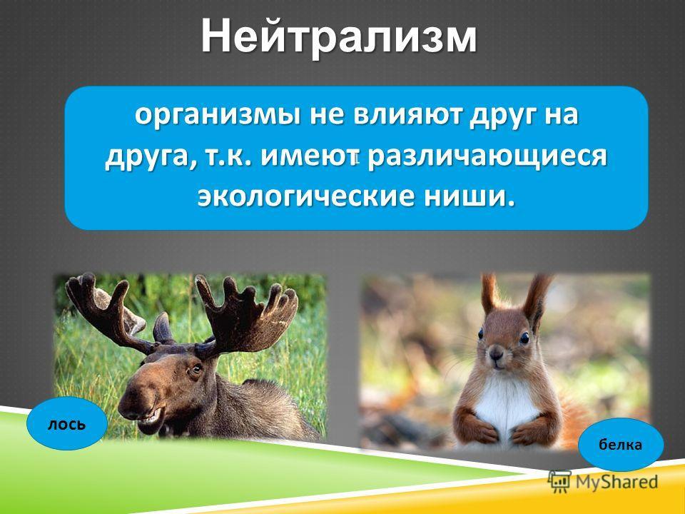 1Нейтрализм организмы не влияют друг на друга, т. к. имеют различающиеся экологические ниши. лось белка