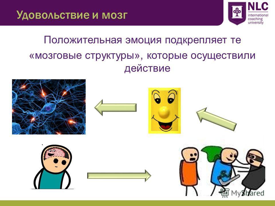 Удовольствие и мозг Положительная эмоция подкрепляет те «мозговые структуры», которые осуществили действие