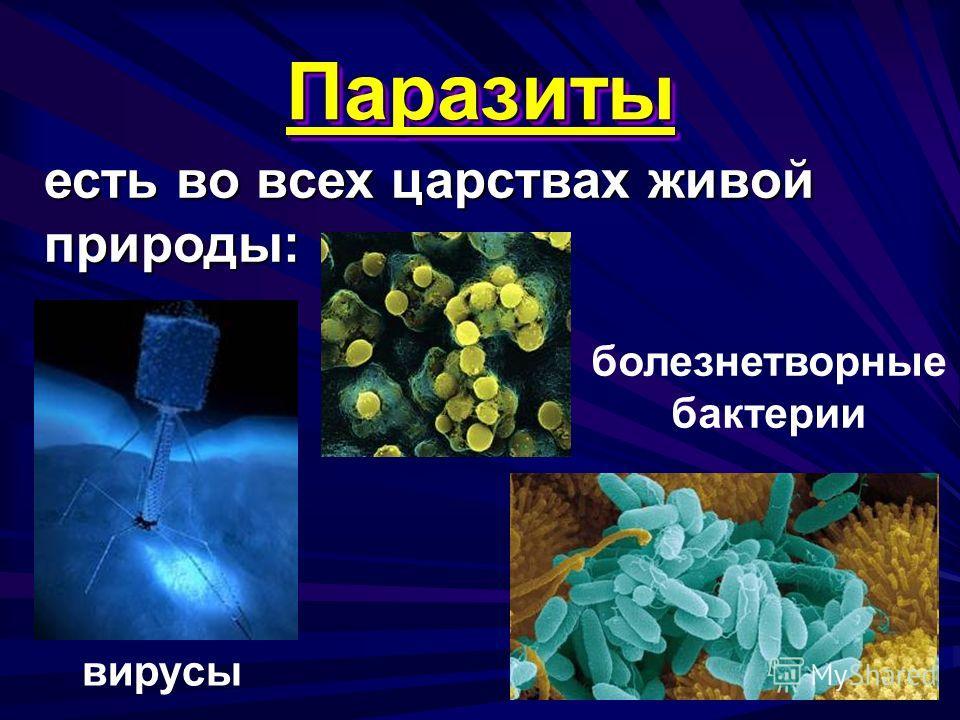 Паразиты Паразиты есть во всех царствах живой природы: вирусы болезнетворные бактерии