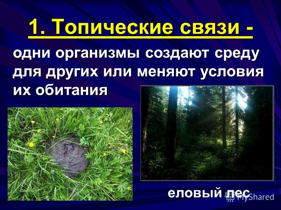 1. Топические связи - одни организмы создают среду для других или меняют условия их обитания еловый лес