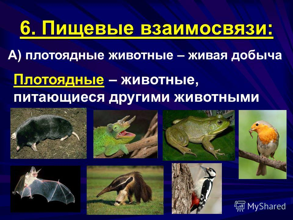 6. Пищевые взаимосвязи: А) плотоядные животные – живая добыча Плотоядные – животные, питающиеся другими животными