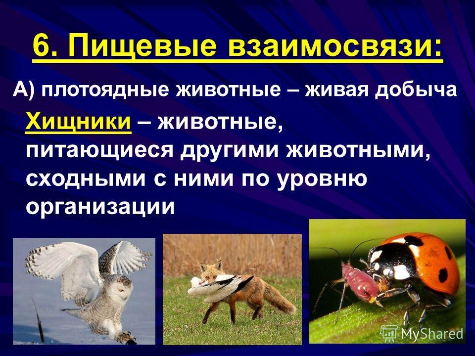 6. Пищевые взаимосвязи: А) плотоядные животные – живая добыча Хищники – животные, питающиеся другими животными, сходными с ними по уровню организации