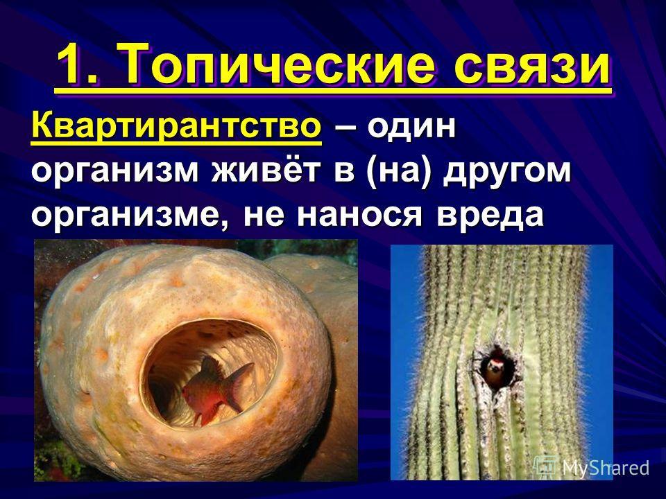 1. Топические связи Квартирантство – один организм живёт в (на) другом организме, не нанося вреда
