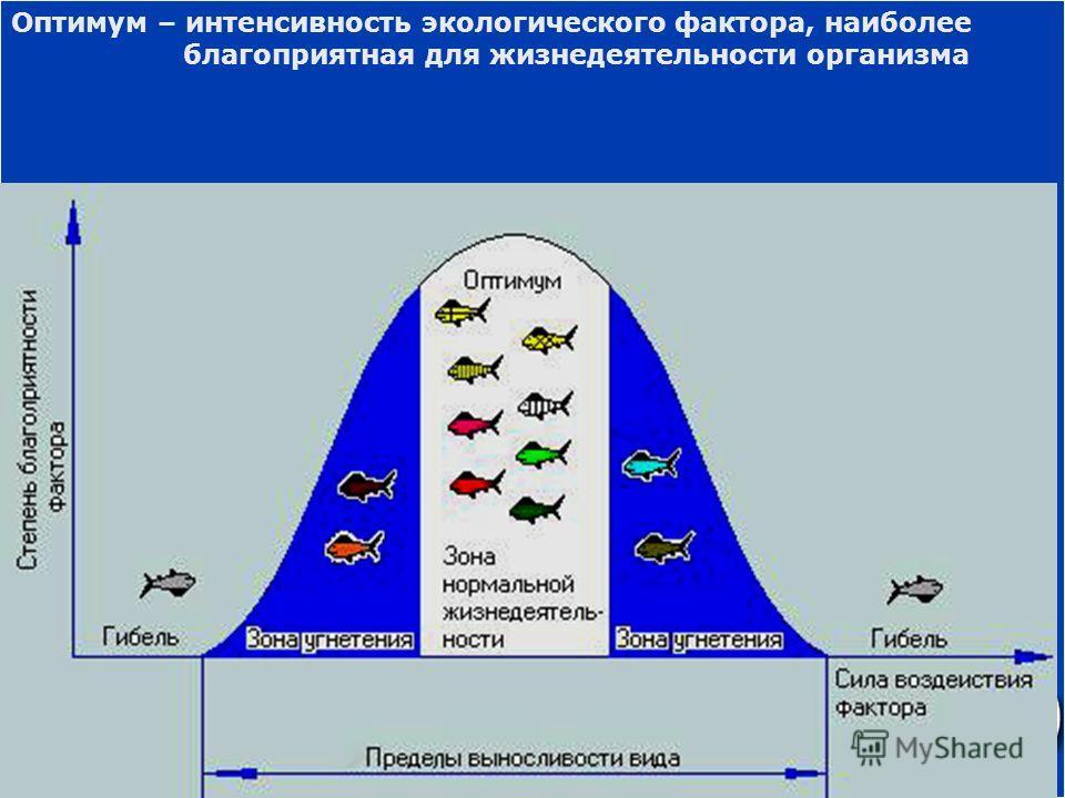 Оптимум – интенсивность экологического фактора, наиболее благоприятная для жизнедеятельности организма